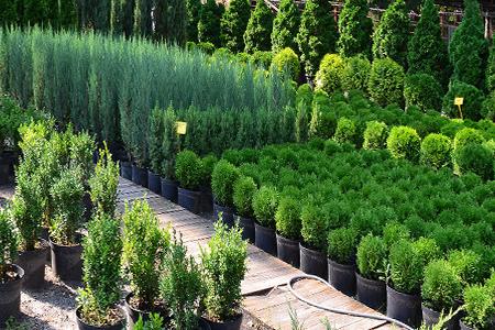 Cобственный питомник растений в Казани