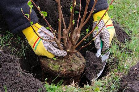 Услуги по посадке растений с гарантией