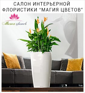 Салон Магия Цветов